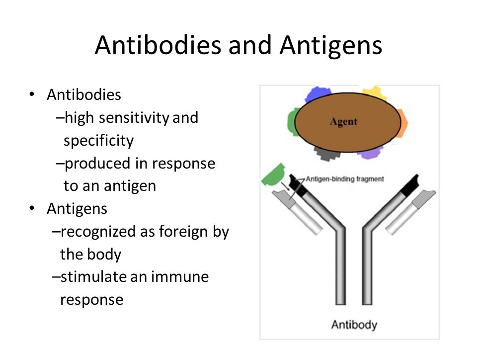 Antibodies and Antigens
