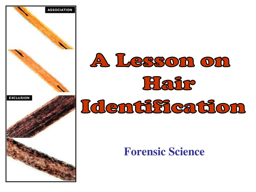 A Lesson On Hair Identification Forensic Science Ppt Download