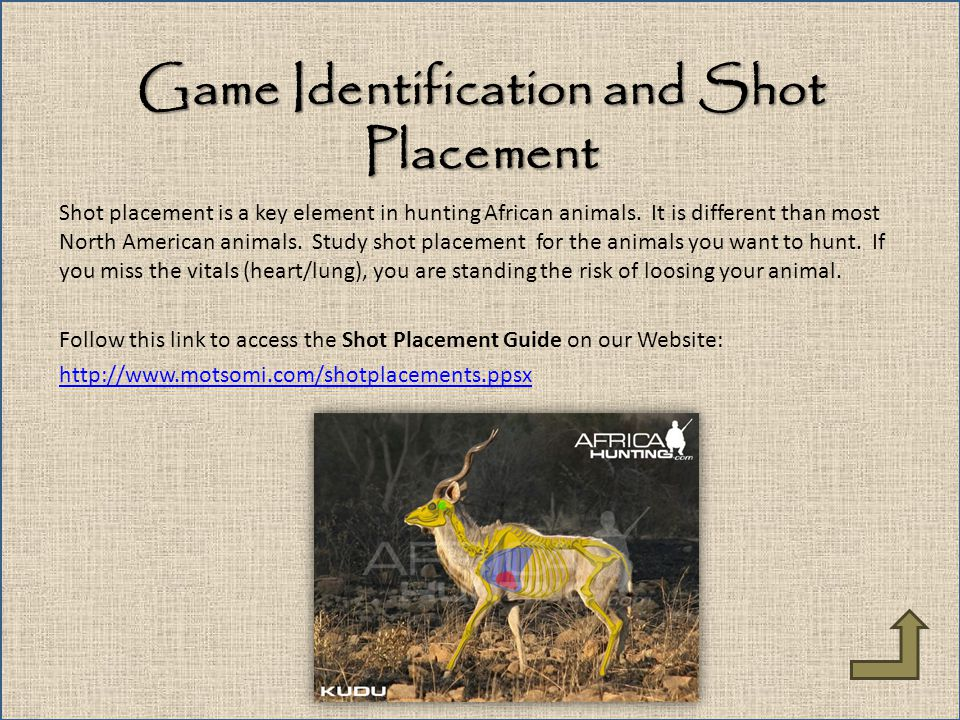 Game Identification and Shot Placement