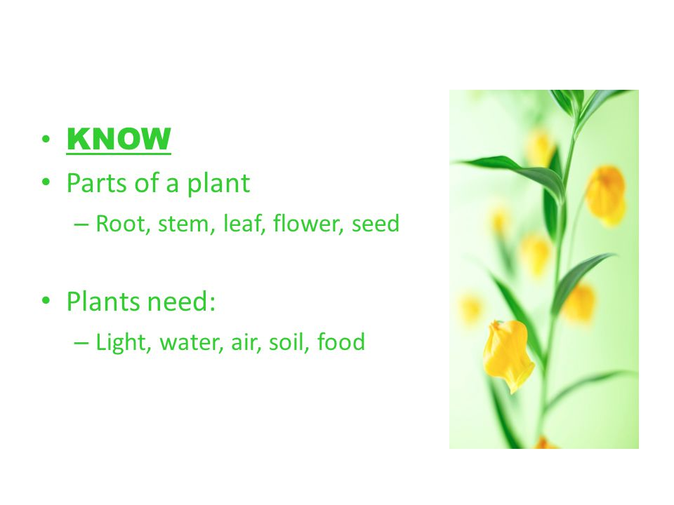 KNOW Parts of a plant Plants need: Root, stem, leaf, flower, seed