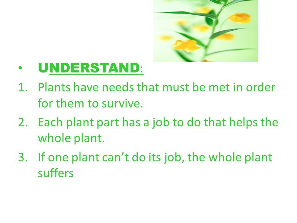 UNDERSTAND: Plants have needs that must be met in order for them to survive. Each plant part has a job to do that helps the whole plant.