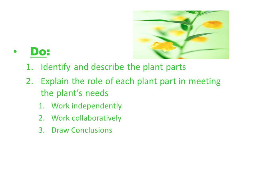 Do: Identify and describe the plant parts