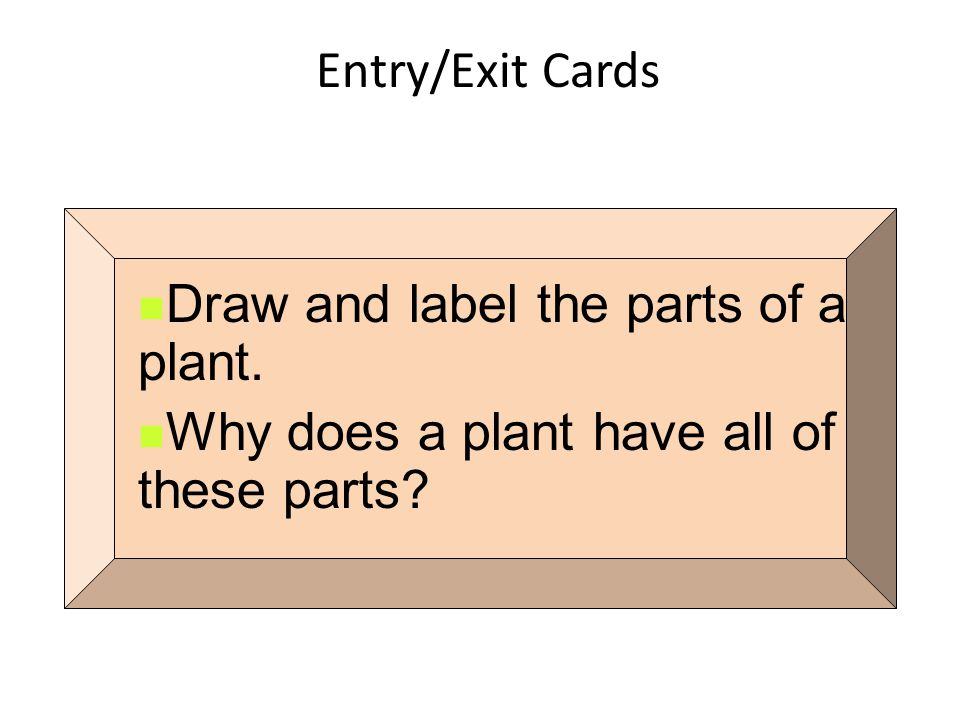 Entry/Exit Cards Draw and label the parts of a plant. Why does a plant have all of these parts