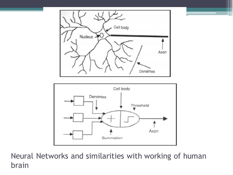 Neural Networks and similarities with working of human brain