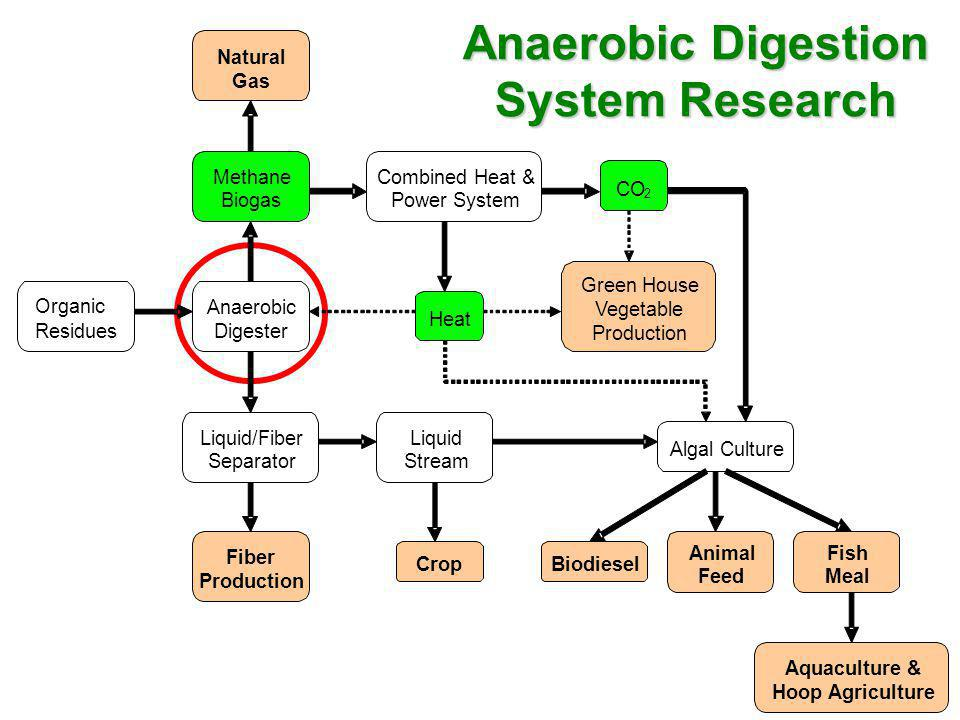 Anaerobic Digestion System Research