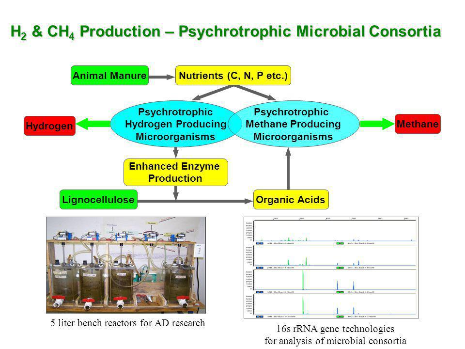 H2 & CH4 Production – Psychrotrophic Microbial Consortia