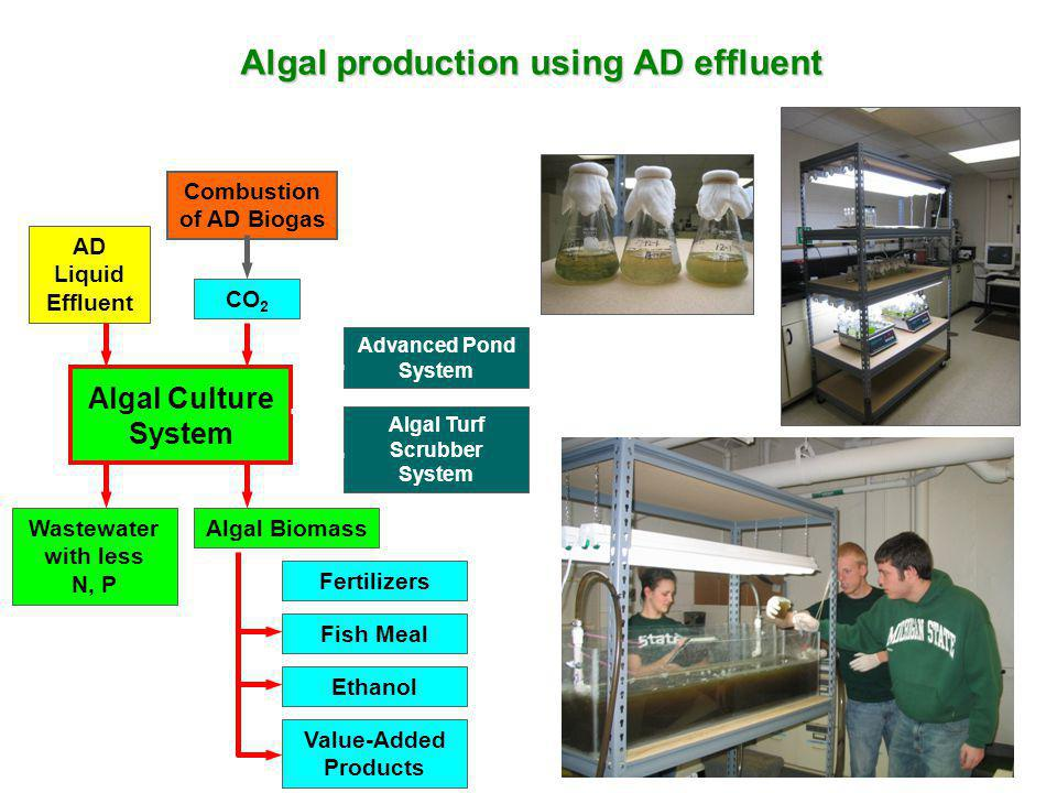 Algal production using AD effluent