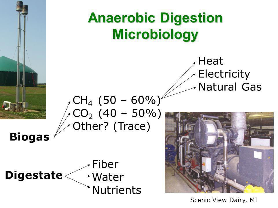 Anaerobic Digestion Microbiology