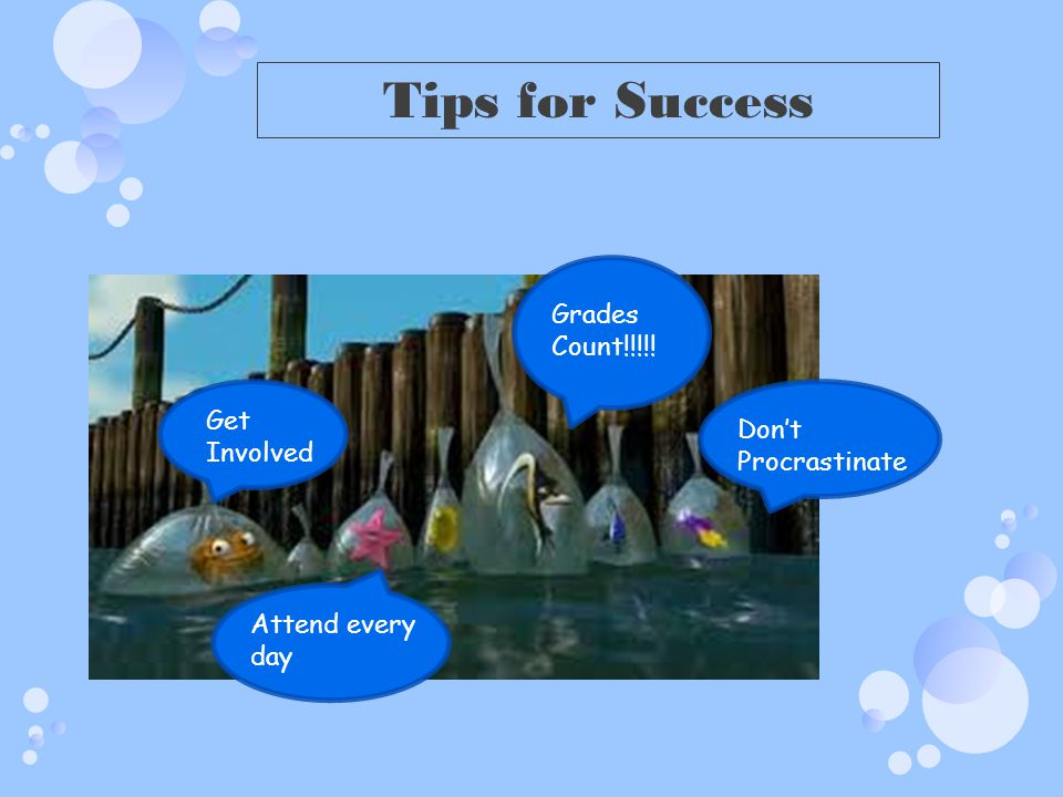 Tips for Success Grades Count!!!!! Get Involved Don't Procrastinate