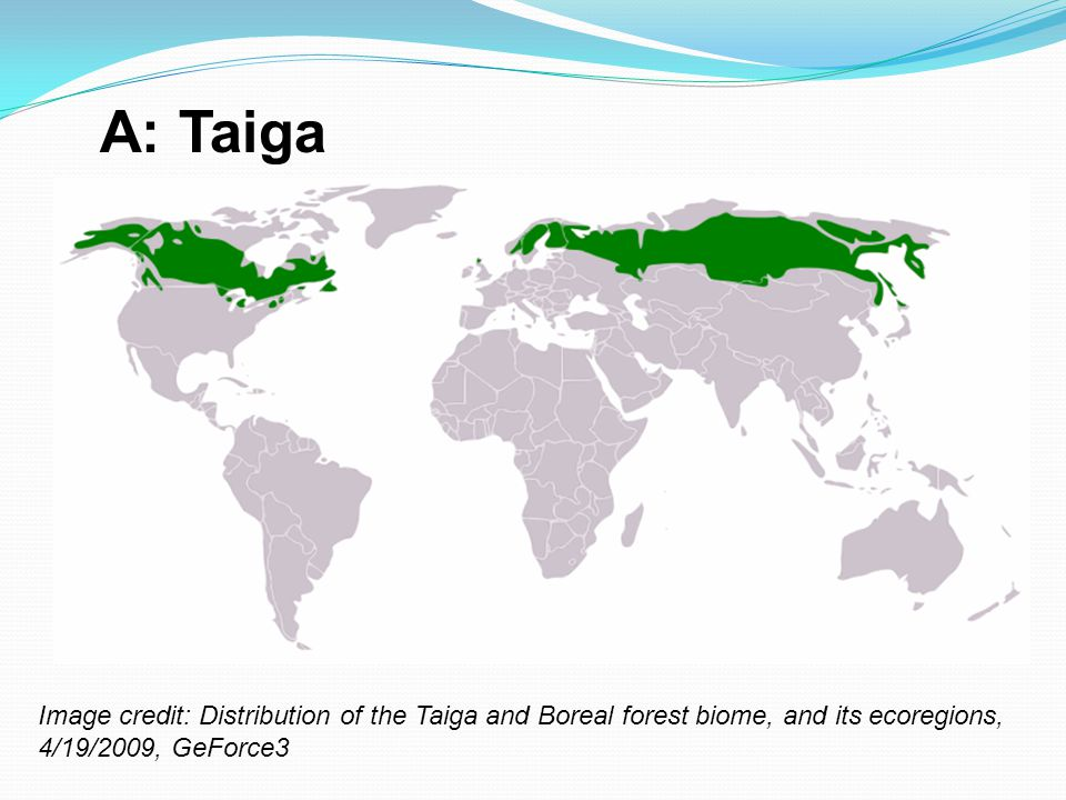A: Taiga Image credit: Distribution of the Taiga and Boreal forest biome, and its ecoregions, 4/19/2009, GeForce3.