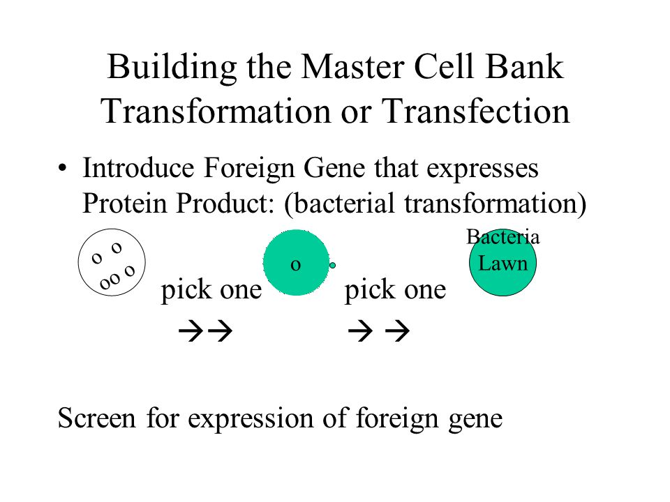 Building the Master Cell Bank Transformation or Transfection