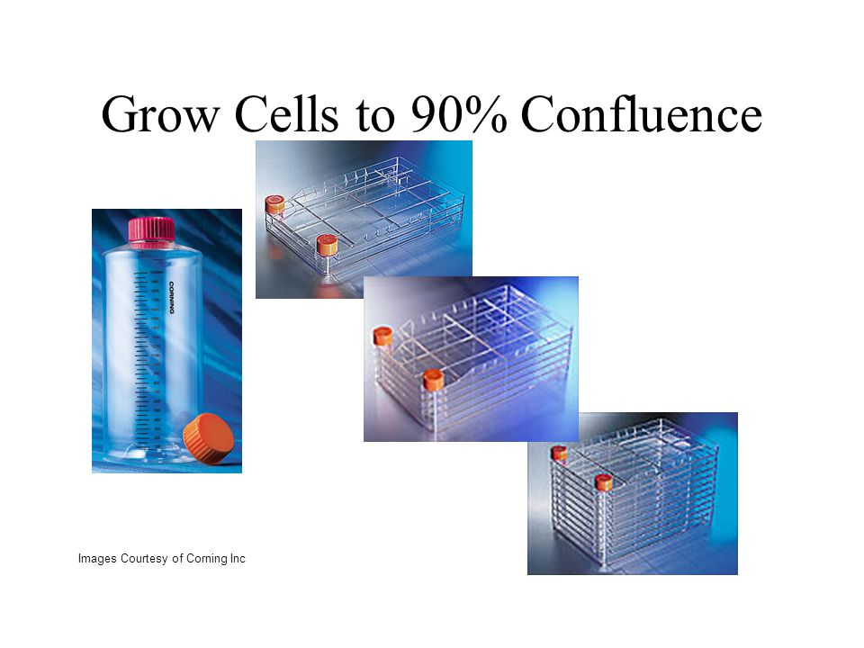 Grow Cells to 90% Confluence
