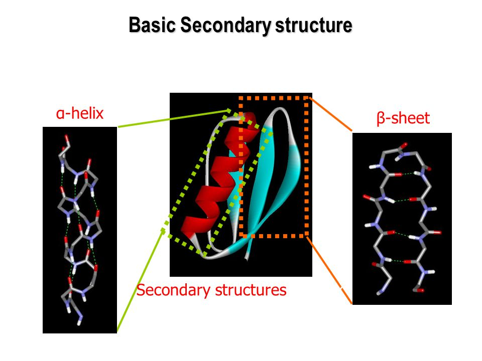 Basic Secondary structure
