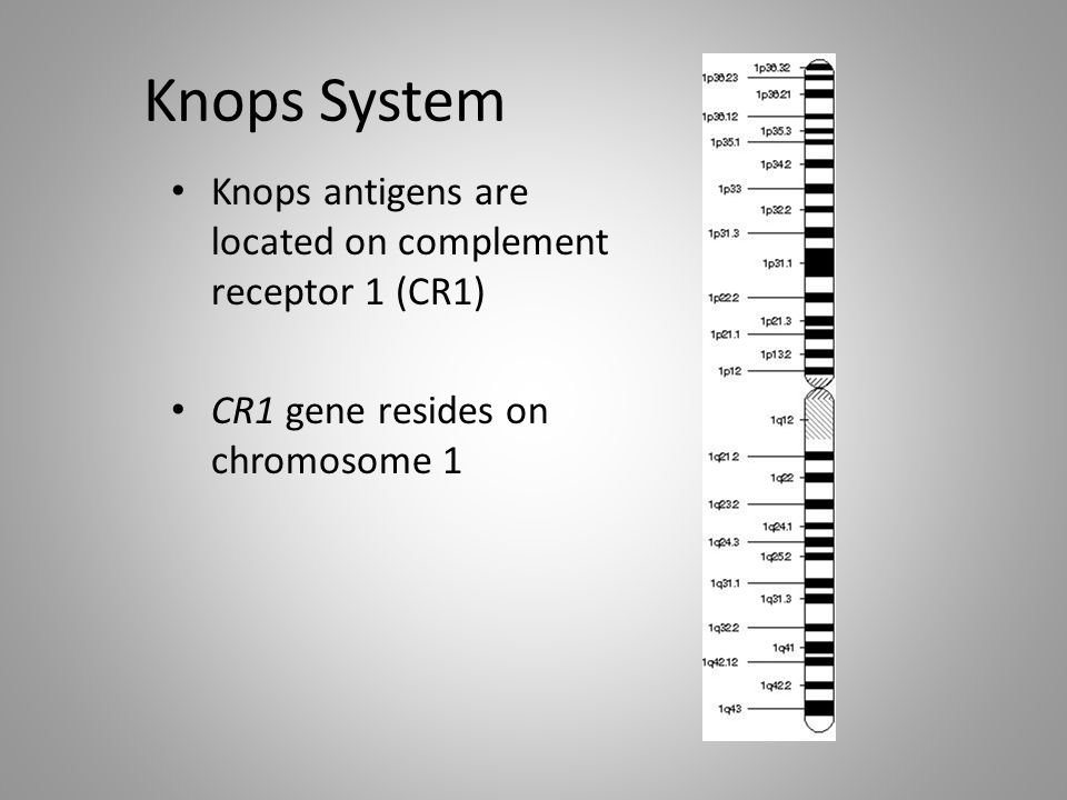 Knops System Knops antigens are located on complement receptor 1 (CR1)