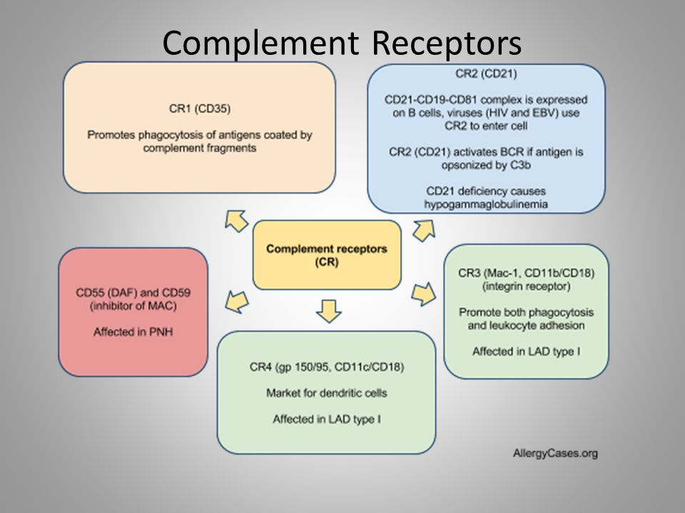 Complement Receptors http://allergycases.blogspot.com/2005/10/adaptive-humoral-immunity.html