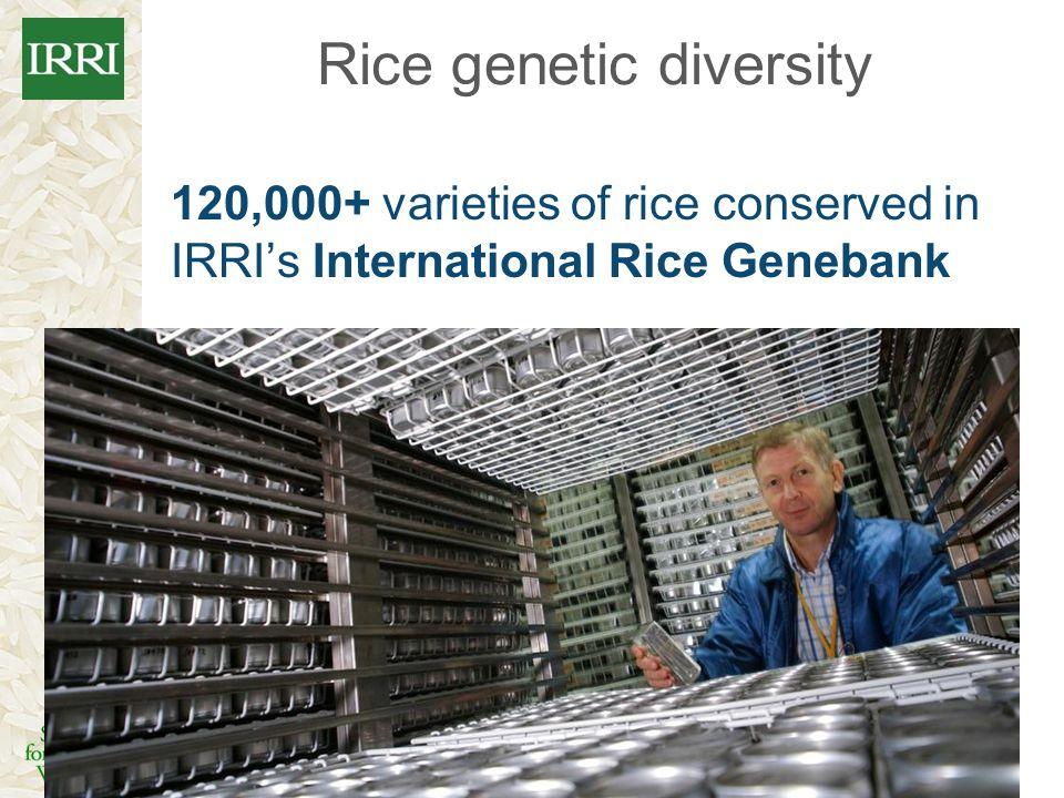 Rice genetic diversity