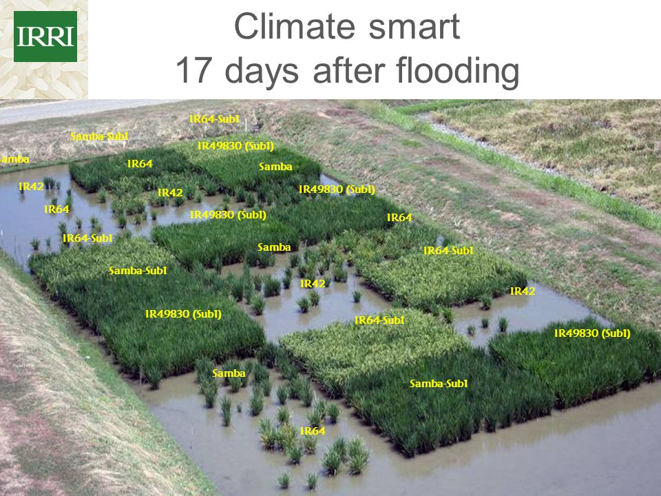 Climate smart 17 days after flooding