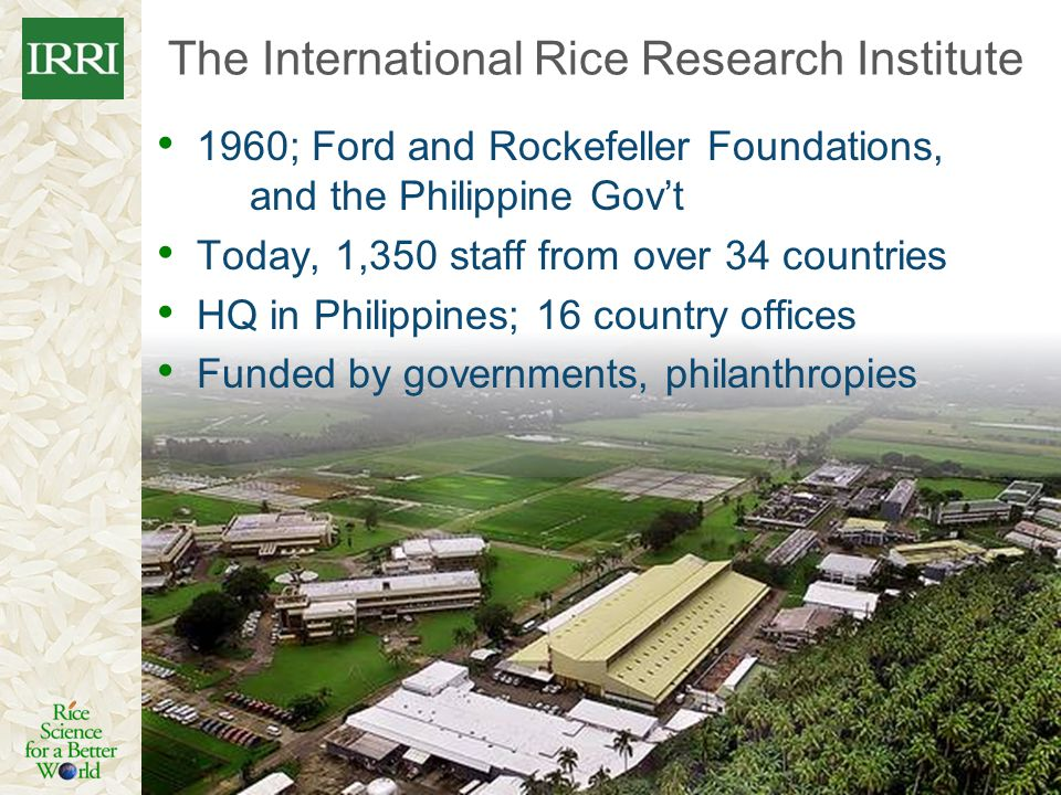 The International Rice Research Institute