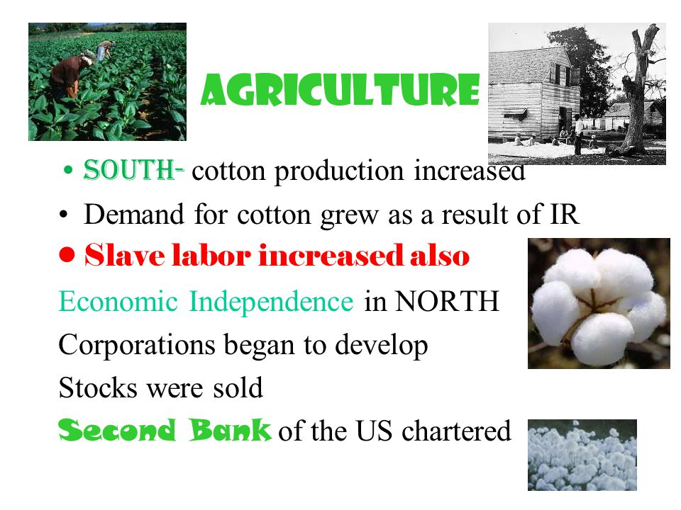 Agriculture South- cotton production increased