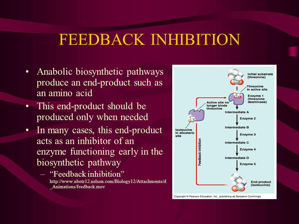 FEEDBACK INHIBITION Anabolic biosynthetic pathways produce an end-product such as an amino acid.