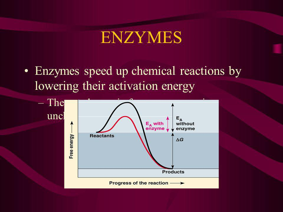 ENZYMES Enzymes speed up chemical reactions by lowering their activation energy.