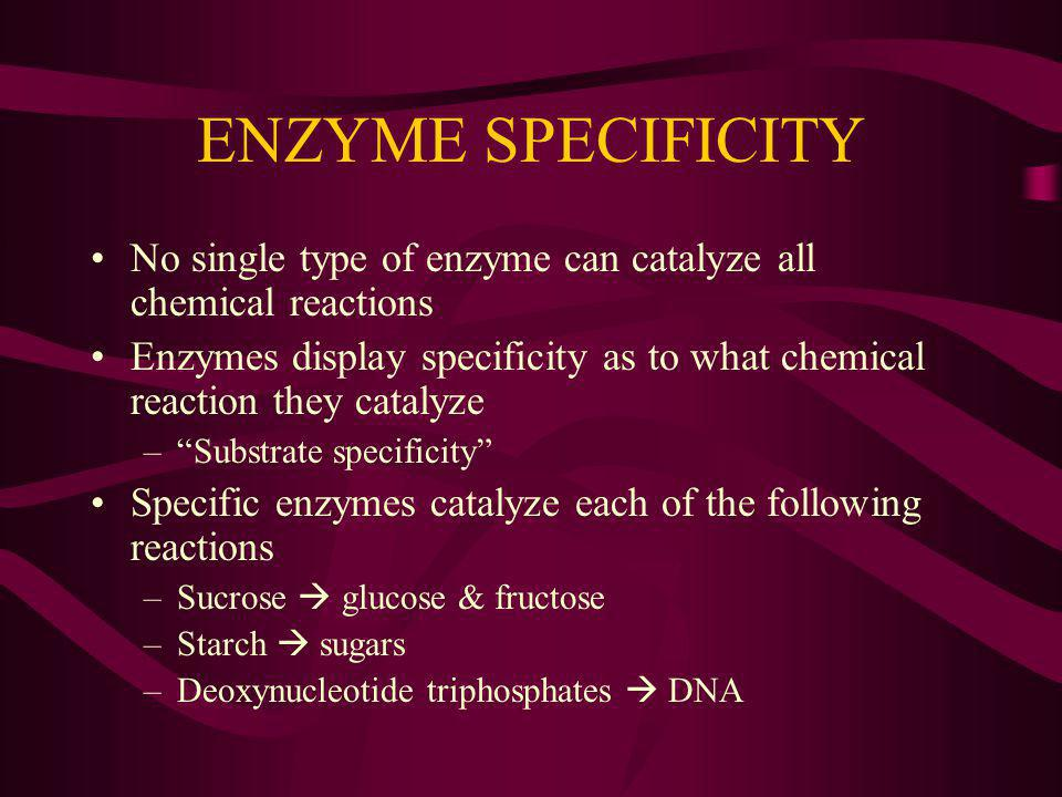 ENZYME SPECIFICITY No single type of enzyme can catalyze all chemical reactions.