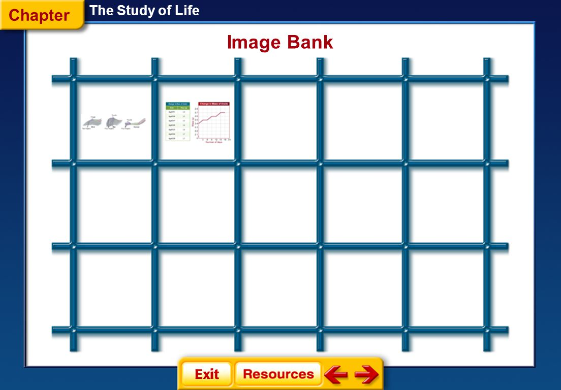 Chapter The Study of Life Image Bank