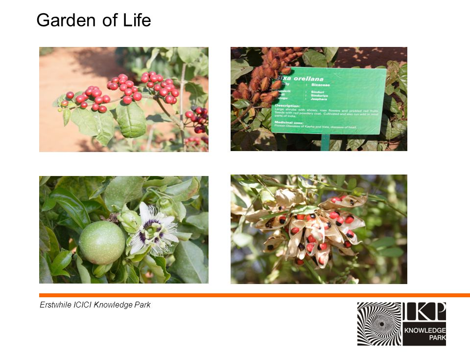 Garden of Life Erstwhile ICICI Knowledge Park * * 07/16/96 07/16/96 *