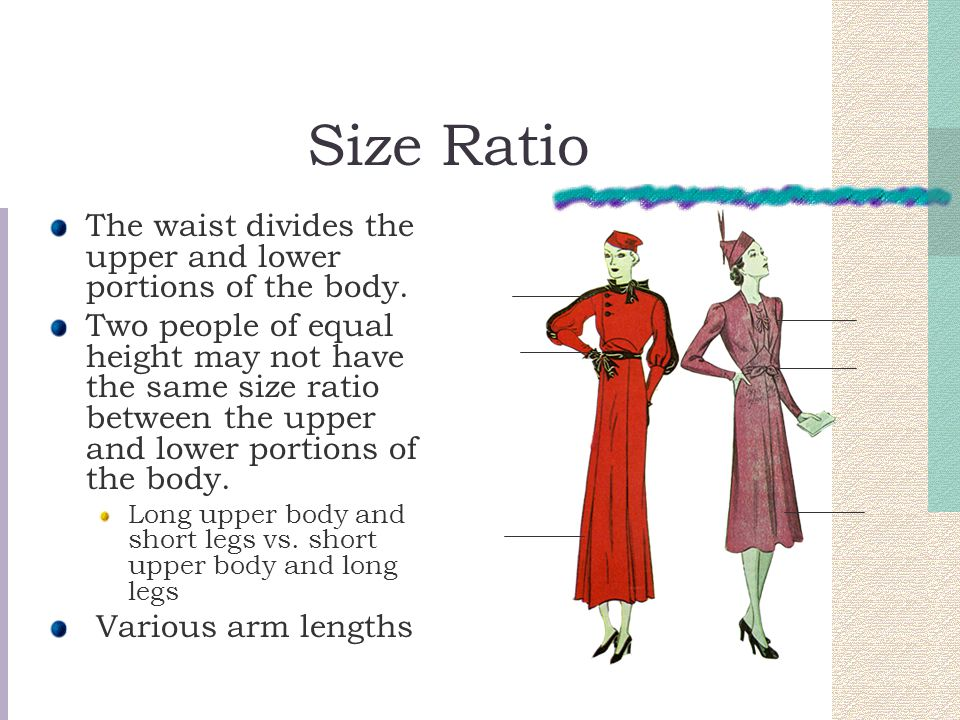 Size Ratio The waist divides the upper and lower portions of the body.