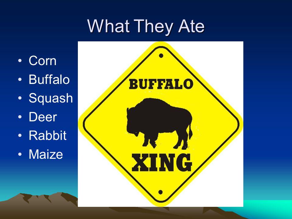 What They Ate Corn Buffalo Squash Deer Rabbit Maize