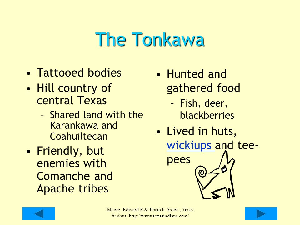 The Tonkawa Tattooed bodies Hill country of central Texas