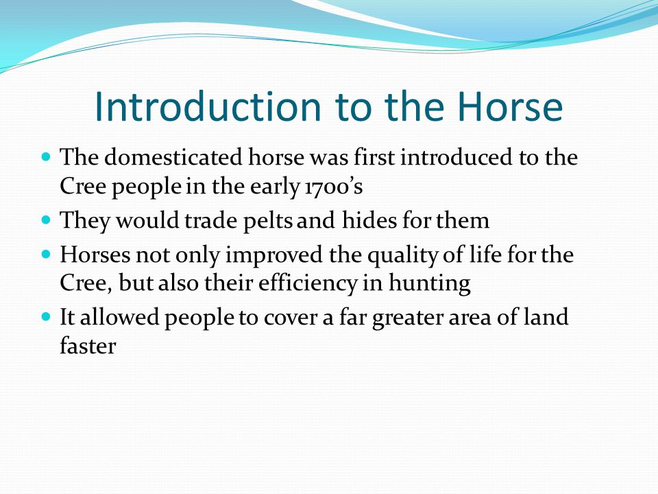 Introduction to the Horse