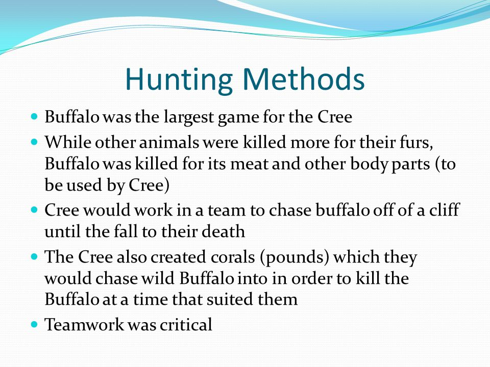 Hunting Methods Buffalo was the largest game for the Cree