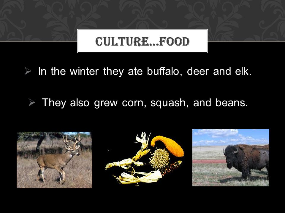 Culture…Food In the winter they ate buffalo, deer and elk.