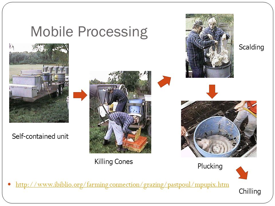 Mobile Processing Scalding. Self-contained unit. Killing Cones. Plucking. http://www.ibiblio.org/farming connection/grazing/pastpoul/mpupix.htm.