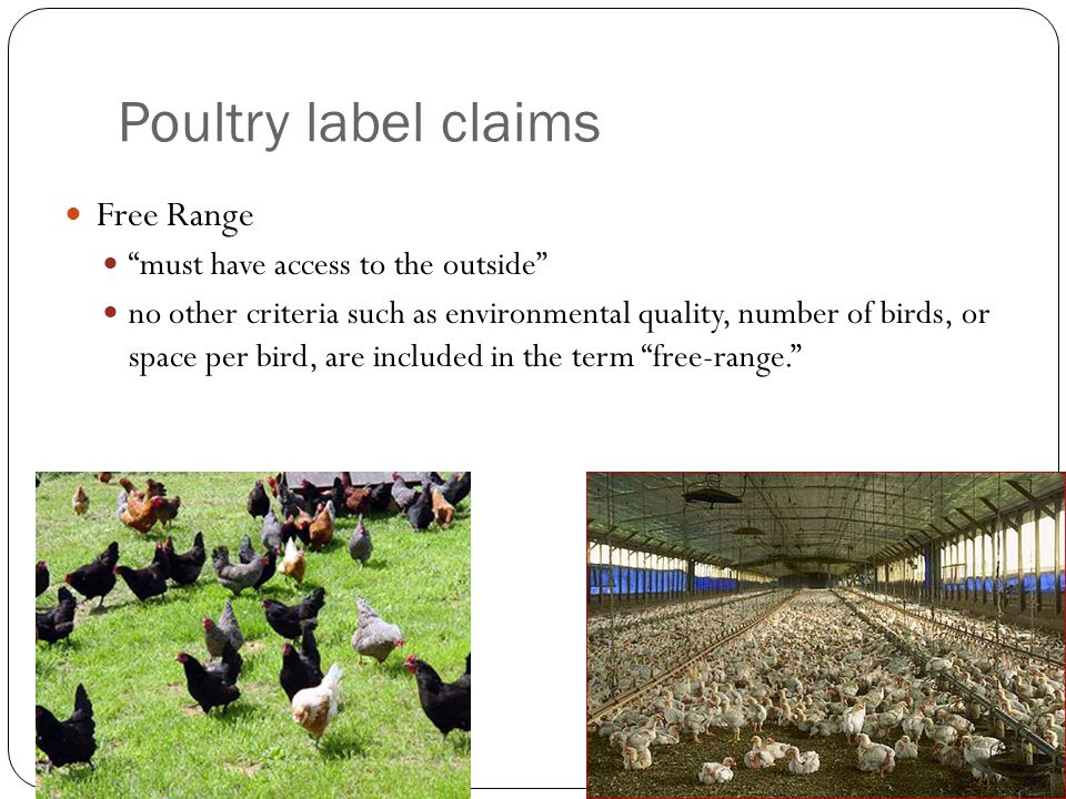 Poultry label claims Free Range must have access to the outside