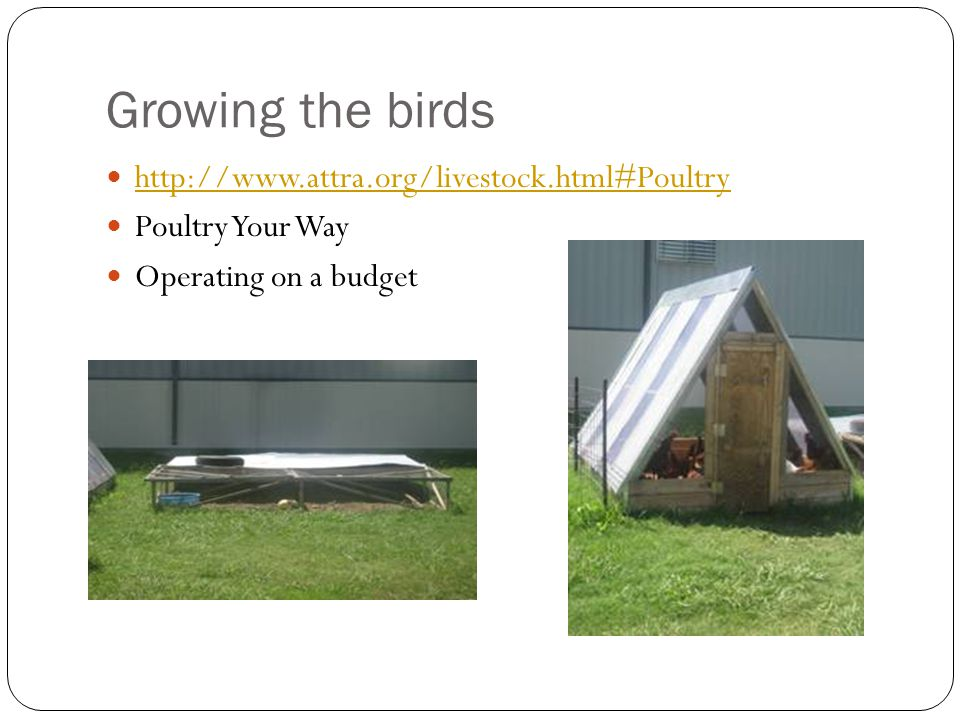 Growing the birds http://www.attra.org/livestock.html#Poultry