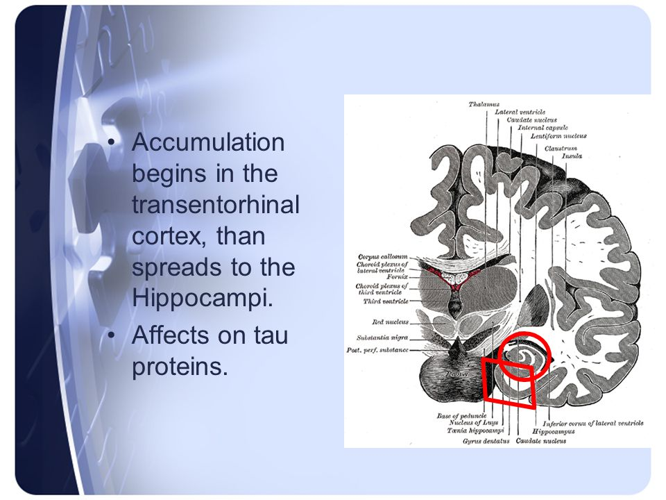 Accumulation begins in the transentorhinal cortex, than spreads to the Hippocampi.