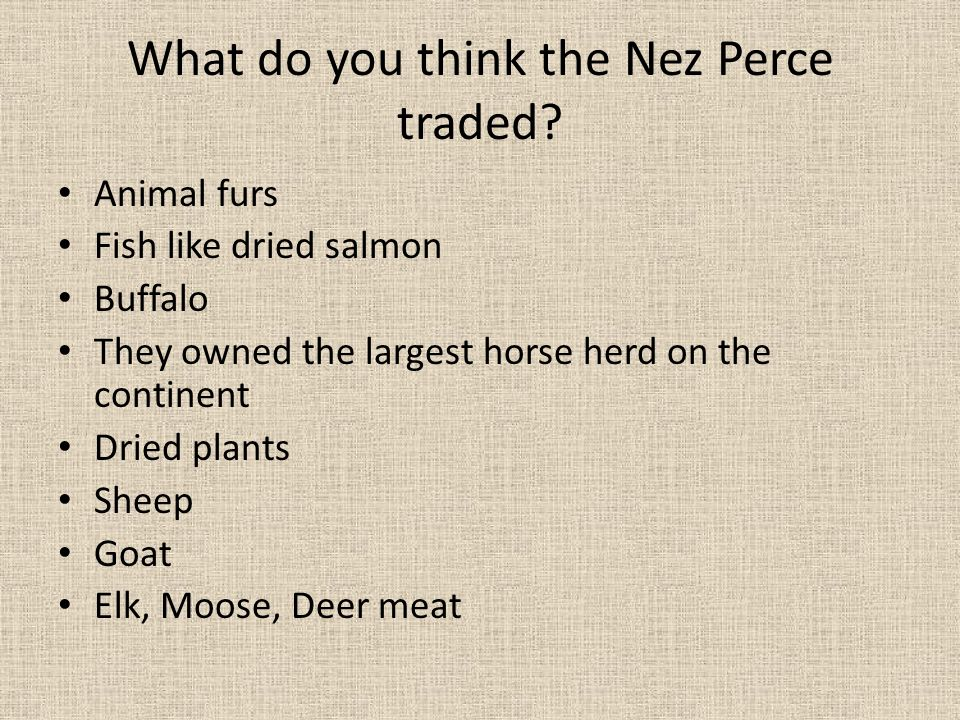 What do you think the Nez Perce traded