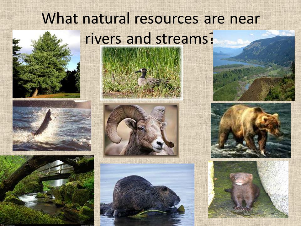 What natural resources are near rivers and streams