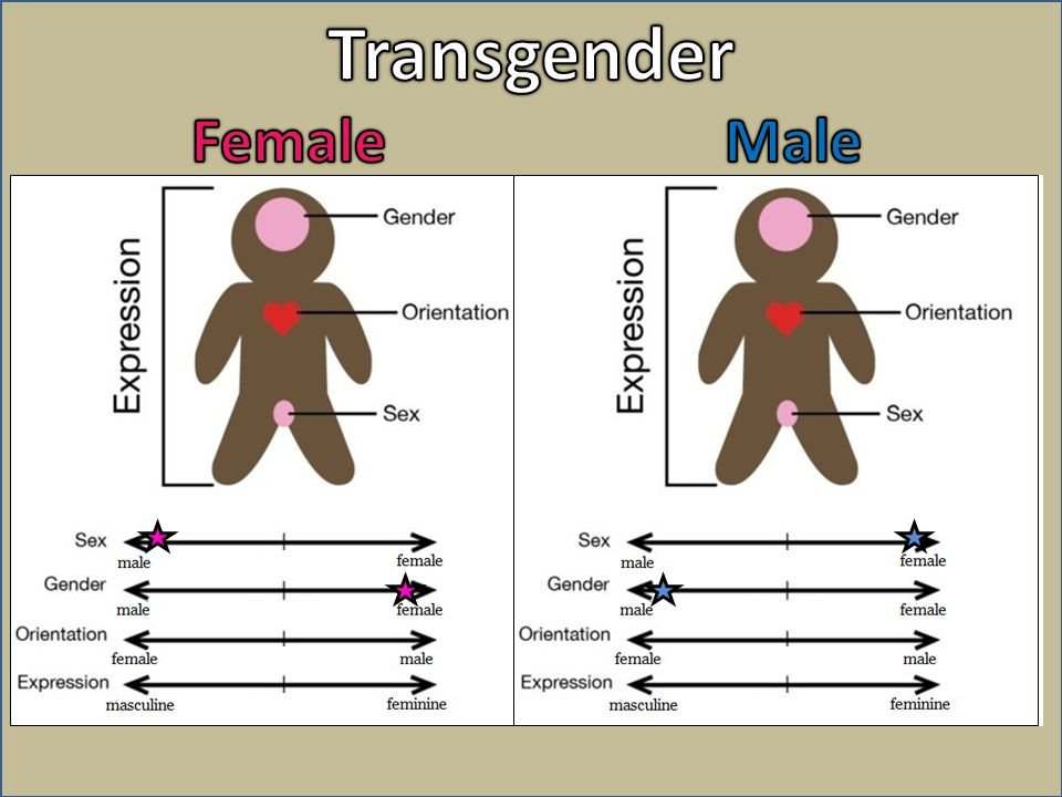Transgender Female Male