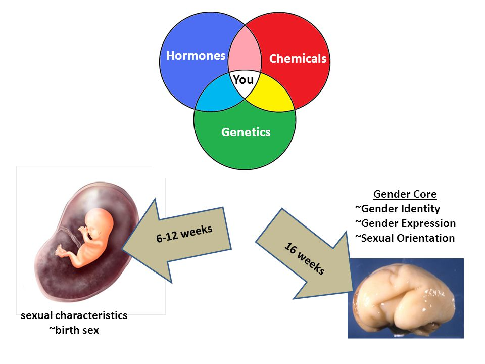 Hormones Chemicals You Genetics Gender Core ~Gender Identity