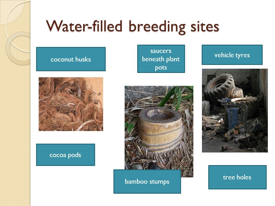 Water-filled breeding sites