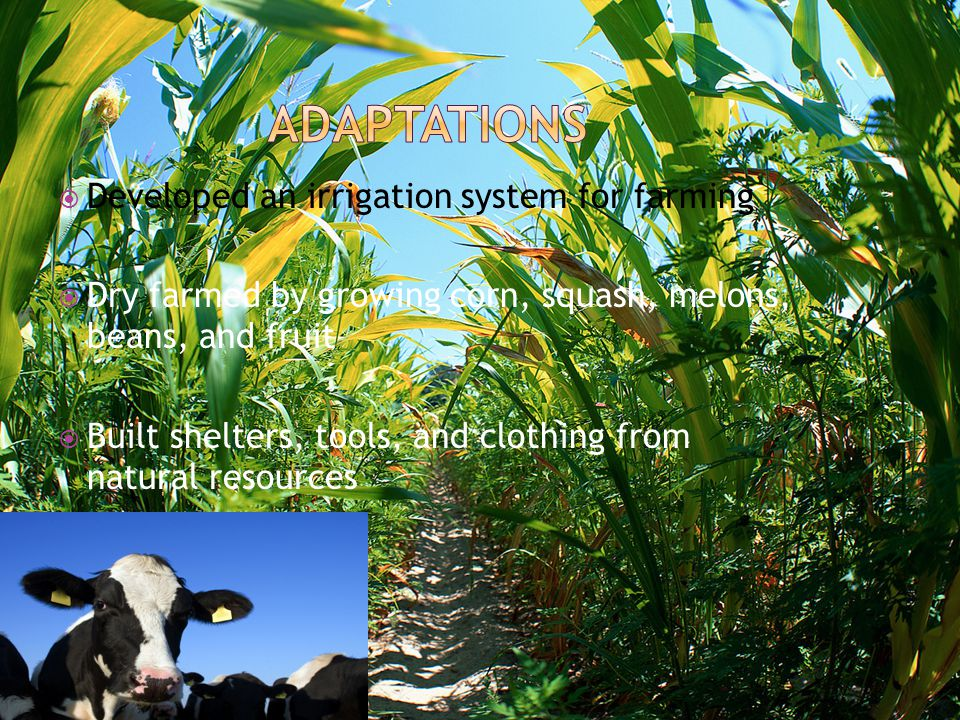 Adaptations Developed an irrigation system for farming