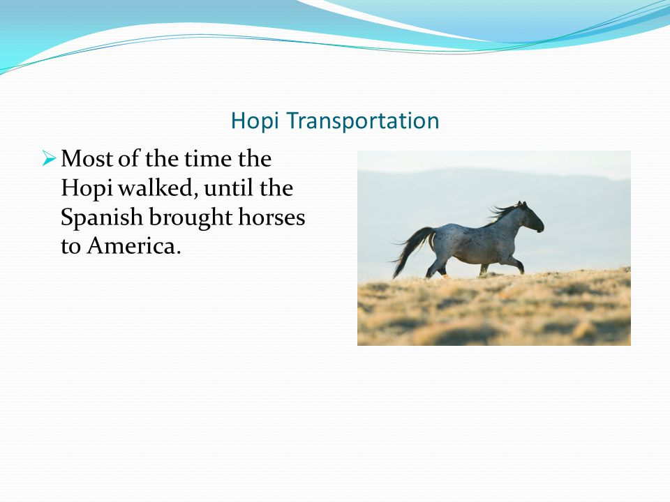 Hopi Transportation Most of the time the Hopi walked, until the Spanish brought horses to America.