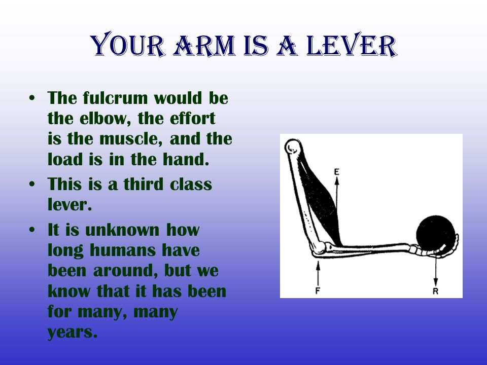 Your Arm is a lever The fulcrum would be the elbow, the effort is the muscle, and the load is in the hand.