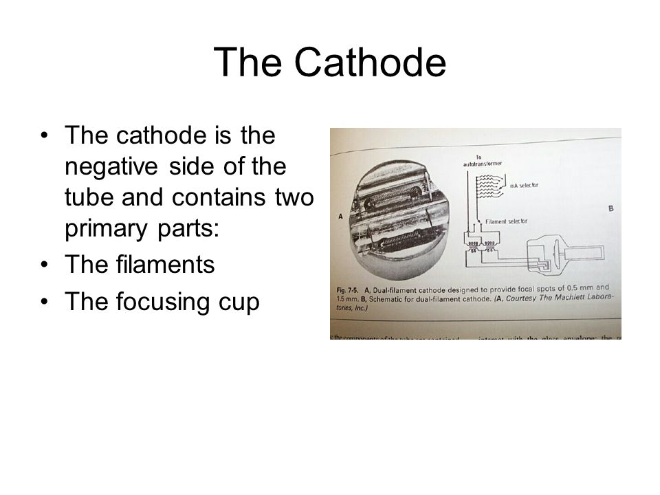 The Cathode The cathode is the negative side of the tube and contains two primary parts: The filaments.