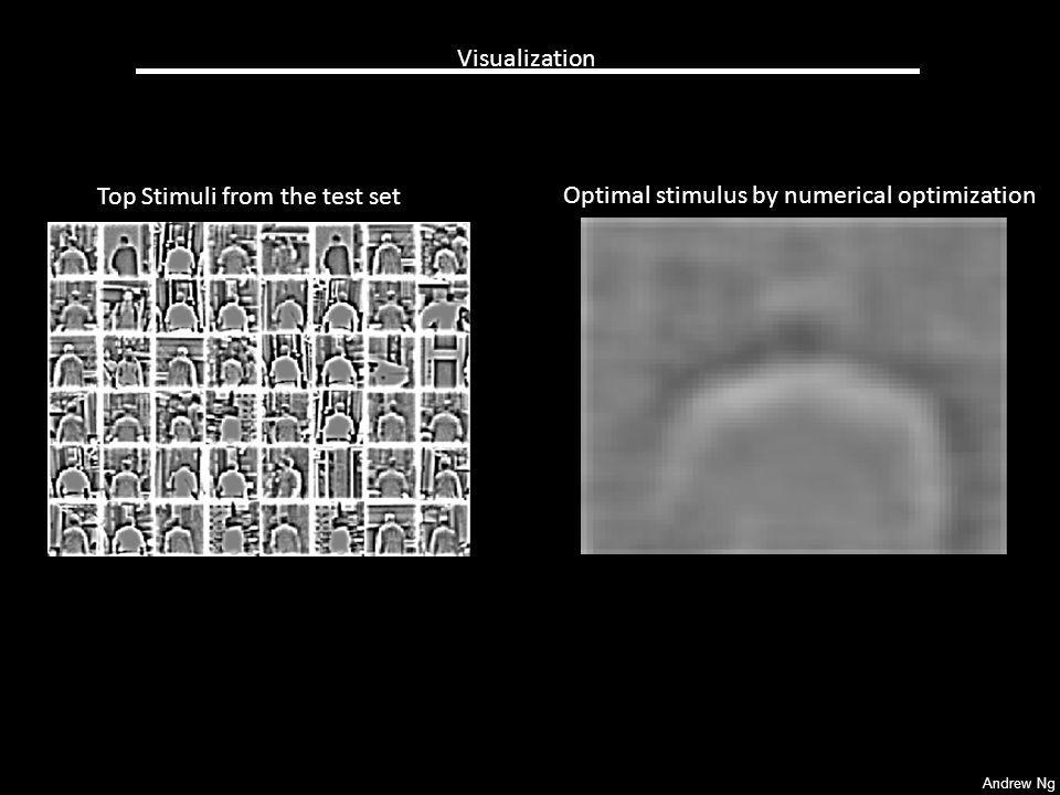 Visualization Top Stimuli from the test set Optimal stimulus by numerical optimization