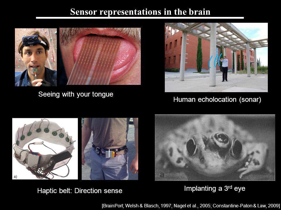 Sensor representations in the brain