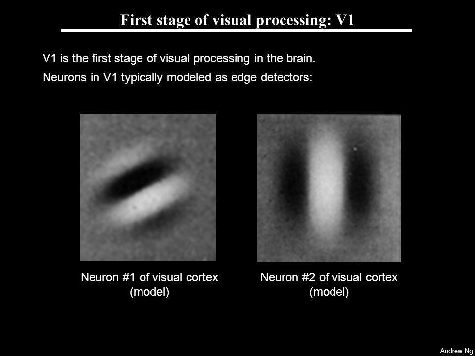 First stage of visual processing: V1